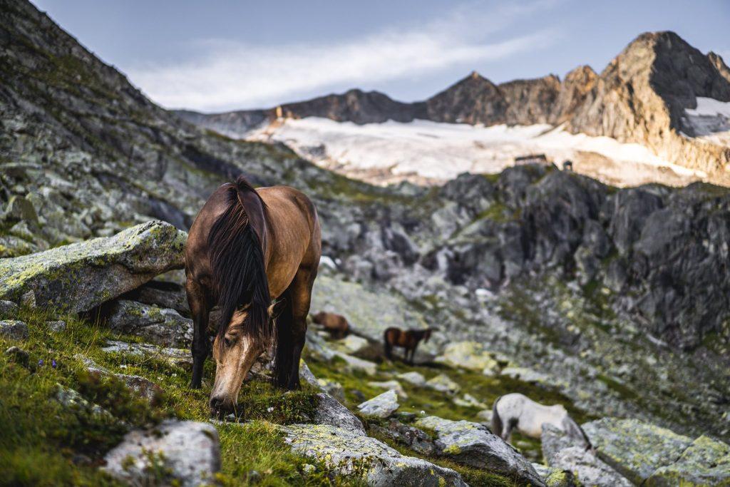 Dreiländer Tour - kôň v Alpách