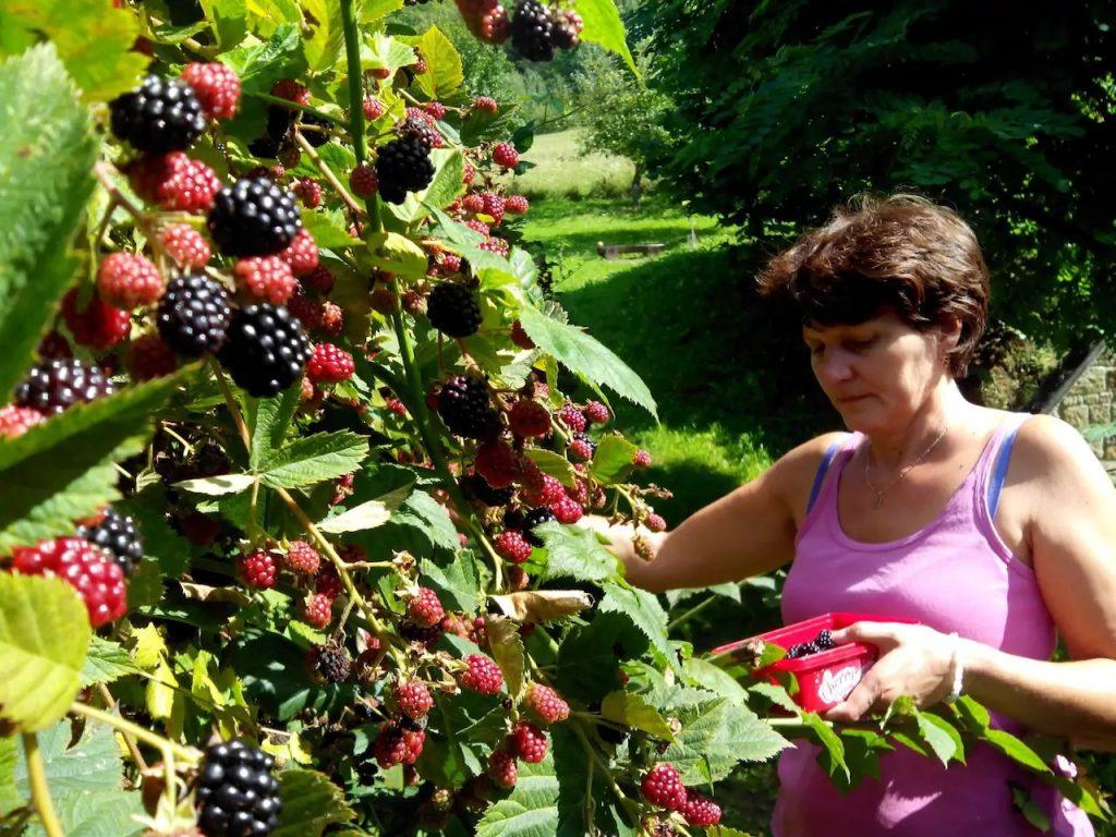 ubytovanie v Šiatorskej Bukovinke pri Fiľakove - príroda, agroturistika