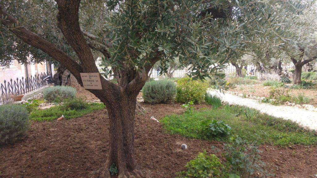 Čo ukrýva Jeruzalem? Tieto tri netradičné miesta musíte vidieť! 11